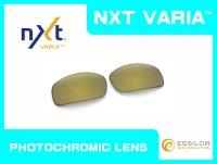 X-SQUARED NXT®調光レンズ ゴールドヴァリア